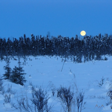 Full moon rising over spruce trees, Point Mackenzie Alaska