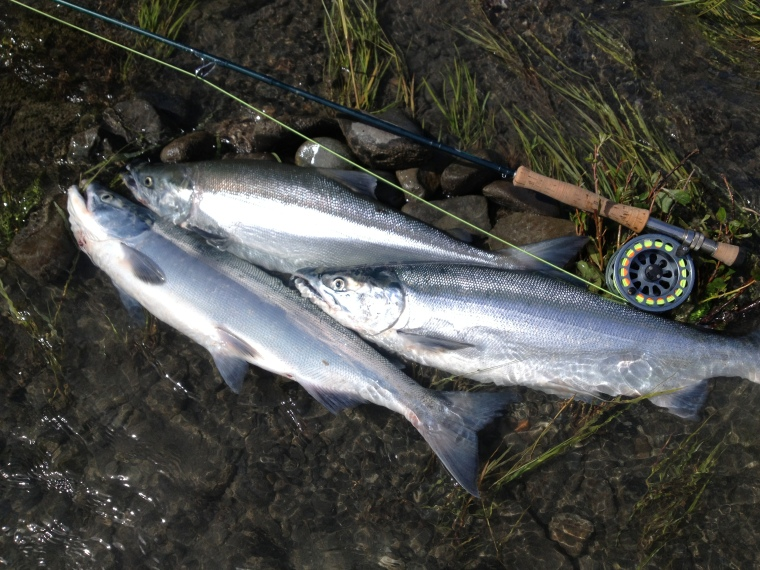 A limit of dime-bright Kenai River Red Salmon